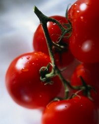 Sales Cycle - Tomatoes